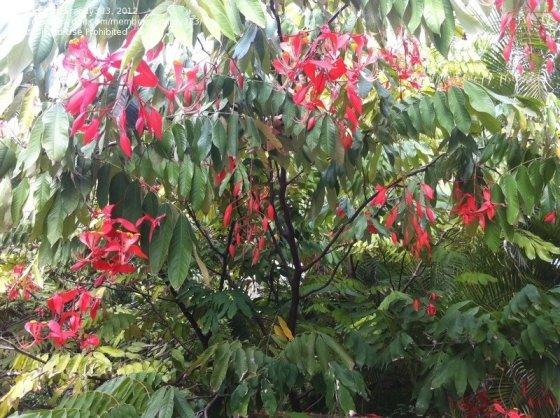 trees in burma